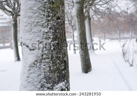 Snowy park trees in a blizzard V�¤llingby, Stockholm, Sweden in January. - stock photo