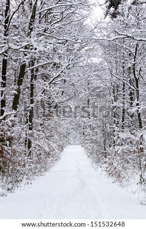 snowy path in winter - stock photo