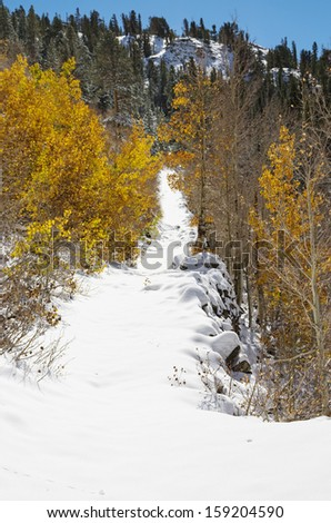 snowy path past some aspen trees with yellow leaves and up a hill