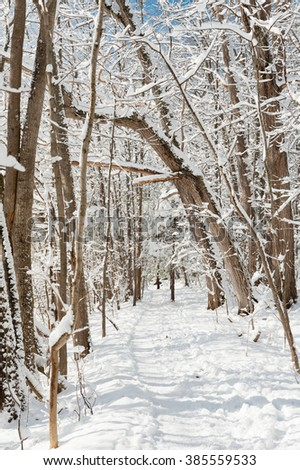 Snowy path through the woods on a clear, winter day in Maine.