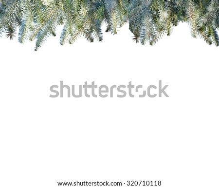 Snowy pine branches isolated on white background - stock photo