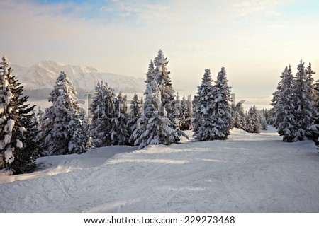 Snowy pine trees on a winter landscape - stock photo