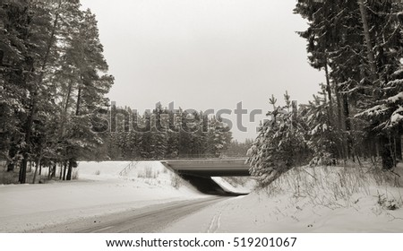 snowy road in cloudy winter day