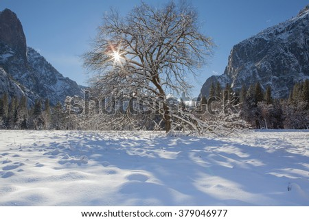 Snowy Tree with Starburst in Yosemite National Park, USA