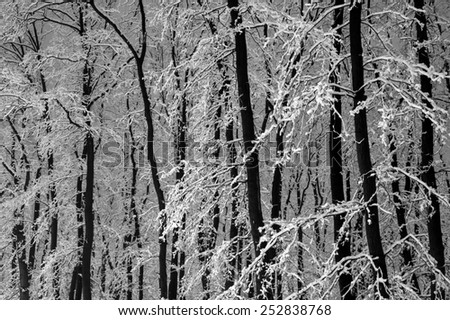 Snowy trees and branches in the forest. - stock photo