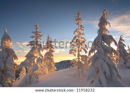 Snowy Trees at Sunrise - stock photo
