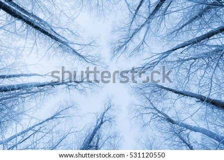 Snowy trees in a forest viewed from below in the winter on a cloudy day.