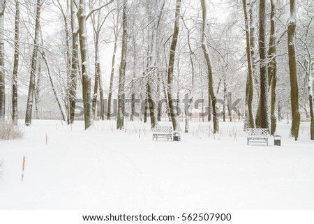 Snowy trees in the Park in the winter