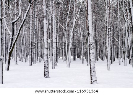 Snowy trees in the winter forest - stock photo