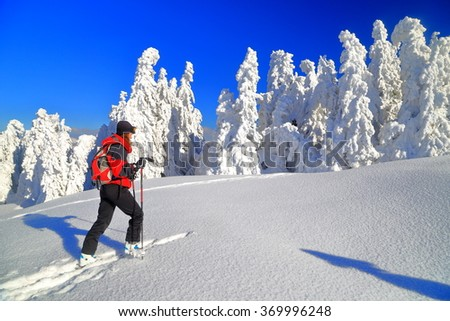 Snowy trees on sunny mountain side and woman climbing on touring skis  - stock photo