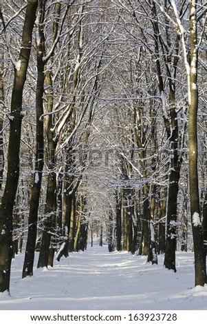 Snowy winter forest lane, near Ede, Gelderland, the Netherlands.