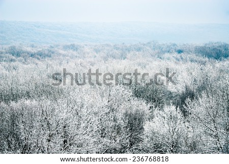 Snowy winter forest trees landscape  - stock photo