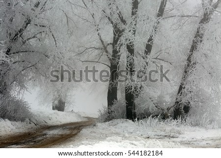 Snowy winter in a deciduous forest.