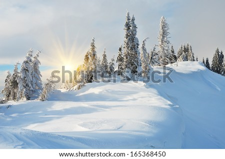 Snowy winter in a mountain forest with snowdrifts