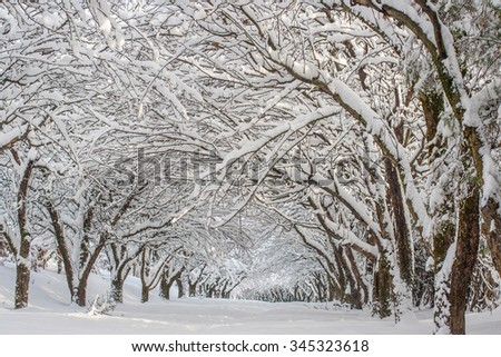 snowy winter landscape in a park - stock photo