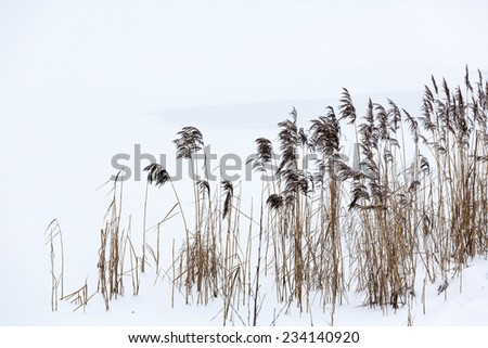Snowy winter landscape with dry frozen reeds on the shoreline - stock photo