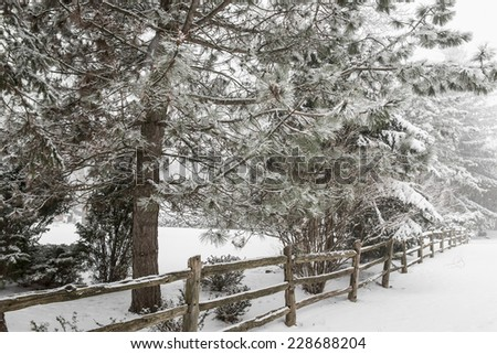Snowy winter landscape with rural wooden fence and snow covered pine tree - stock photo