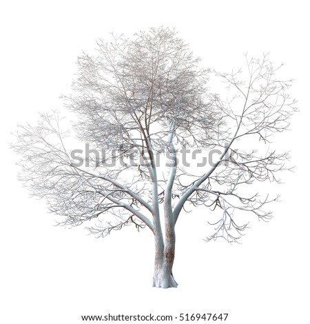 Snowy winter tree. Forked trunk. Long branches covered with shimmering snow. Isolated on white background with clipping path included. 3D rendering.