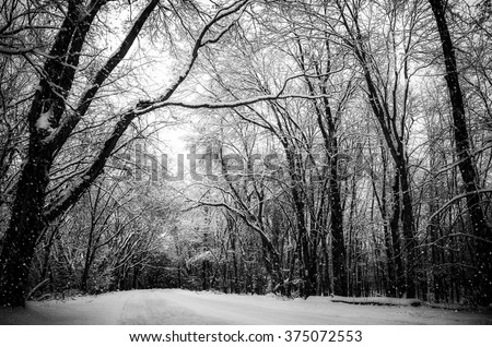 Snowy Winter Way. Snow Falls onto Forest Road Surrounded by Tall Trees. Vintage Black and White Landscape Background with Copy Space.