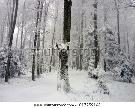Snowy woods on Medvednica mountain, Zagreb, Croatia