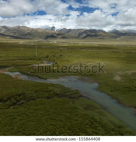 Snowy yak in Tibet, China - stock photo