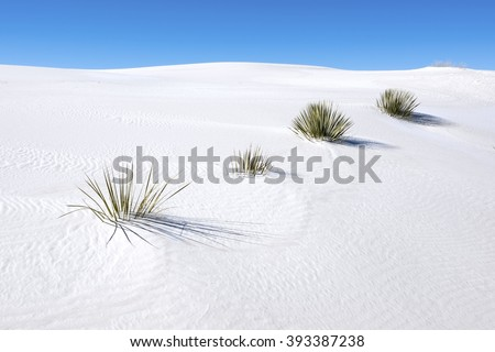 Soaptree yucca in White Sands National Monument. - stock photo
