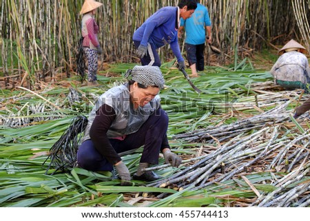 SOC TRANG, VIET NAM- JULY 14, 2016: Group of Asian farmer working on sugar cane field