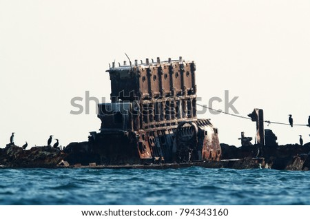 Socotra and great cormorant perched on shipwreck, Bahrain