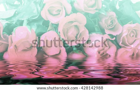 Soft and blurred focus rose flower on colorful filter style for background - stock photo