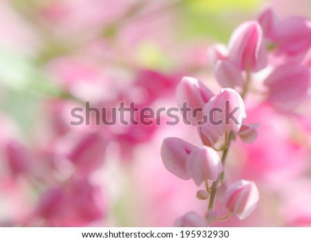 Soft background of sweet pink petals tropical flower.