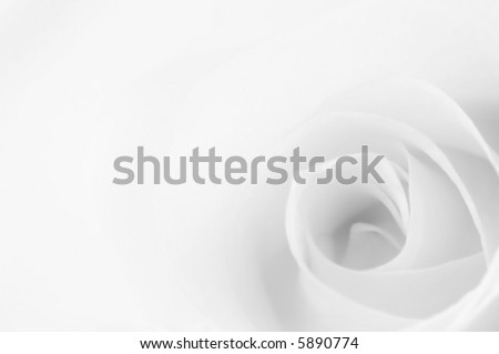 Soft black and white rose with space for text - stock photo