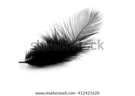 Soft black feather isolated on white background
