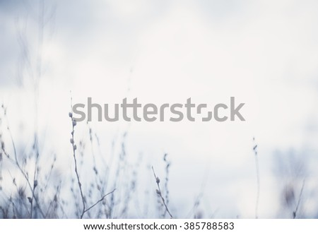 Soft blurred blue background with tree branches