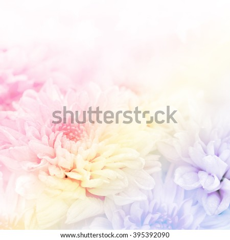 Soft blurred of gerbera flowers with soft bokeh in pastel color style for background. - stock photo