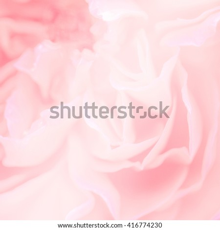 Soft blurred of rose flower in pastel color and blur style for background
