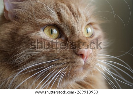 Soft cat - stock photo