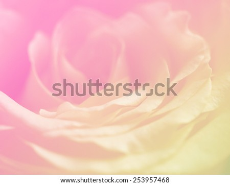 Soft color nature singles rose flowers background