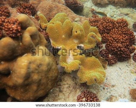 soft coral and mountain coral at Maiton island Thailand  - stock photo