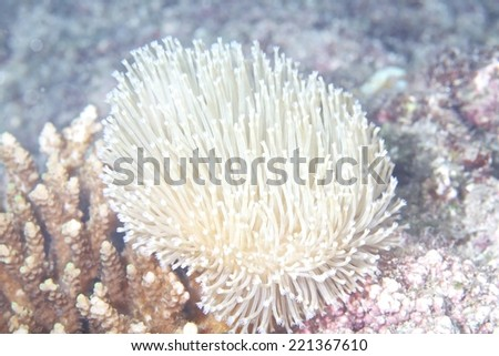 Soft coral close up. - stock photo