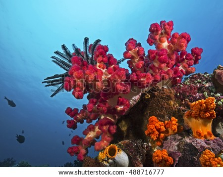Soft Coral in front of the blue water