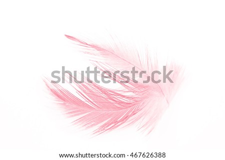 soft  coral pink color trends chicken feather texture background