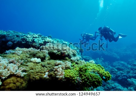 Soft coral with divers background, Green island, Taiwan