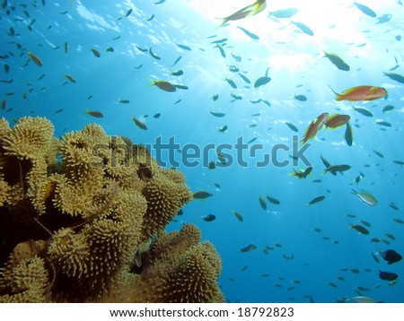 Soft Coral with fish. shot in the Red Sea 12/07/2008 - stock photo