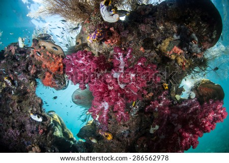 Soft corals and other invertebrates grow on a reef overhang in Raja Ampat, Indonesia. This area harbors some of the Coral Triangle's most healthy marine habitats and offers spectacular diving. - stock photo