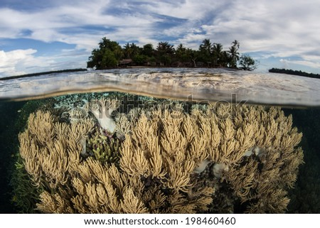 Soft corals grow in the shallows near a remote island in the Solomon Islands. This beautiful, tropical region is within the Coral Triangle and is known for its high marine biological diversity. - stock photo