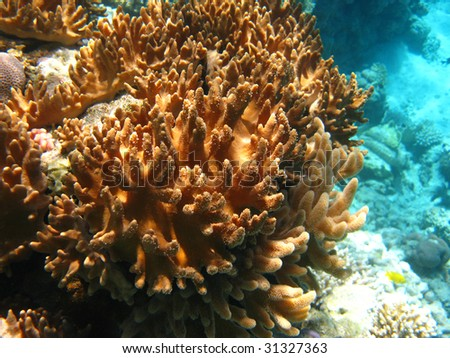 Soft corals in Red sea - stock photo