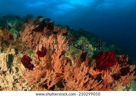 Soft corals waving in the current on a tropical coral reef - stock photo