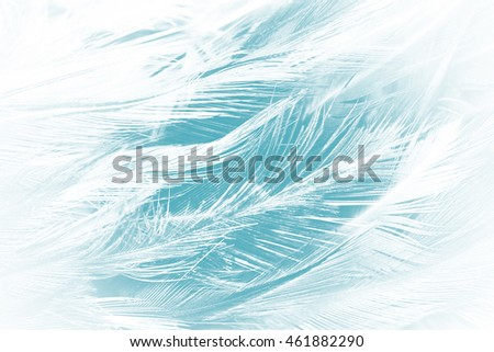 soft feather luxurious color turquoise emerald green texture background