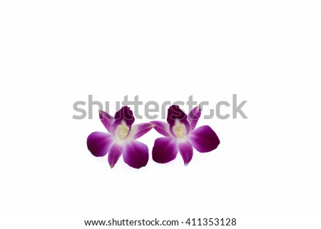 Soft focus and selective focus of a beautiful purple dendrobium orchid flowers isolated on white background - stock photo