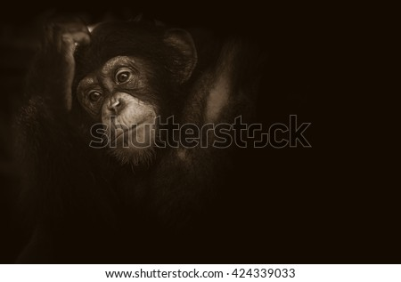 Soft focus baby monkey feel lonesome on black background with space for text